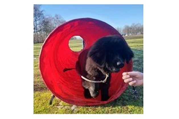 Hondencursussen bij K.C. Venray e.o.