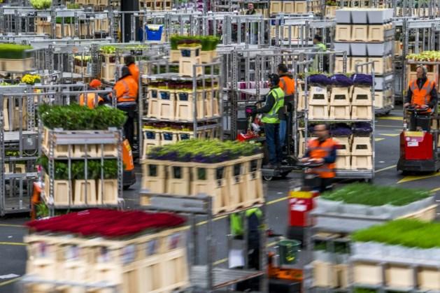 Export bloemen en planten trekt aan