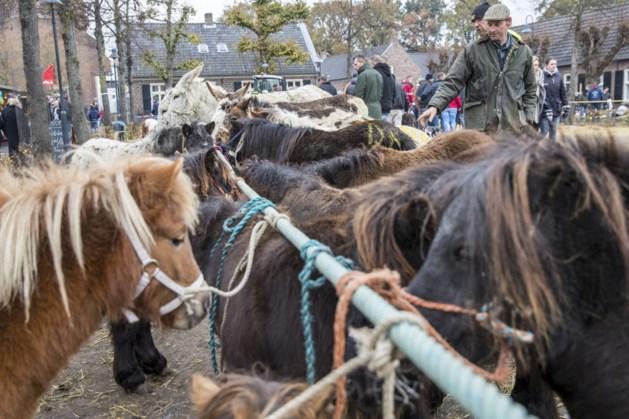 Pastoor zegent paarden in Lottum in