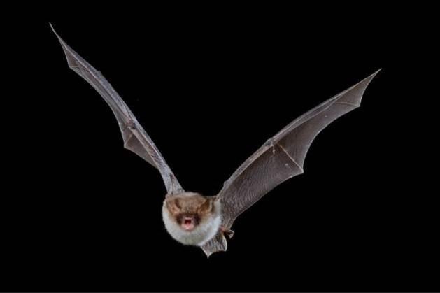Vleermuisexcursie in De Dellen en het Meerssenerbroek