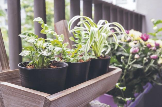 Geen tuin, toch tuinieren? Tips voor planten in pot