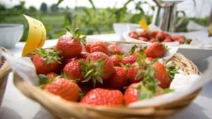 Venloos onderzoek naar revolutionaire aanpak tegen zieke gewassen