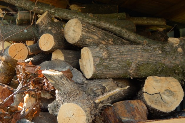Discussie na bomenkap in Oirsbeek