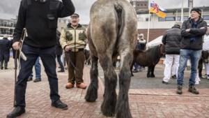 'Geen misstanden met dierenwelzijn op paardenmarkt Weert'
