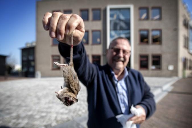 Dode ratten bij woningcorporatie ingeleverd als protest tegen plaag in Landgraaf