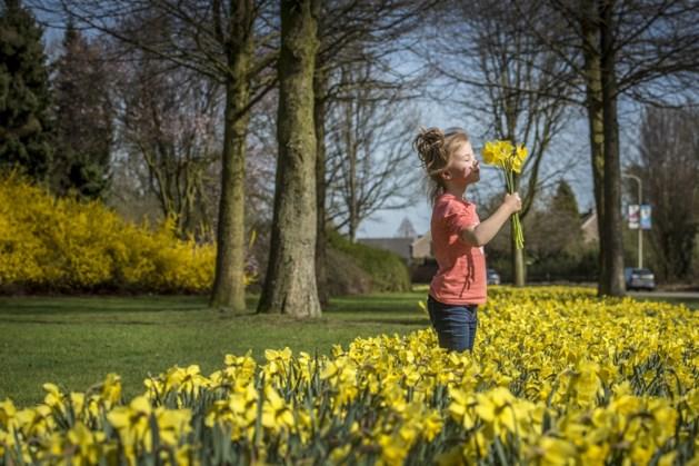 Hou nog even vol: zonnig lenteweer op komst