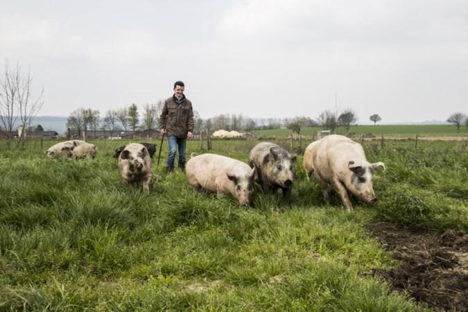 'Kuusjkes' rennen het Heuvelland in: 'Eindelijk een momentje van vreugde'