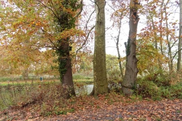 Bomenwandelingen in de vier seizoenen