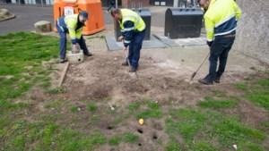 Sittard-Geleen: 'evenveel ratten als inwoners'