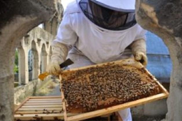 Imker opgelucht: 'Mijn 200.000 bijen op dak Notre-Dame hebben brand overleefd'