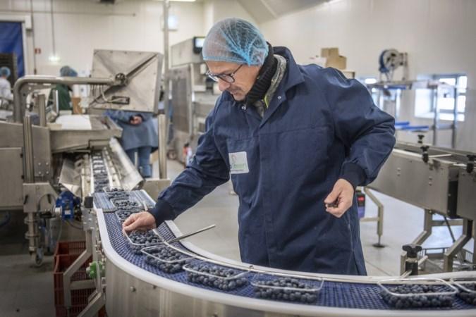 Fruitverpakker Horst vervijfvoudigt capaciteit door populariteit blauwe bessen