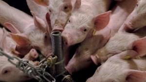 Advies: 'Aanpak stank veebedrijven moet totaal anders'