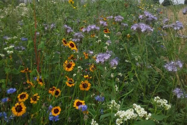 Inzaaiactie voor bloemrijke akkerranden