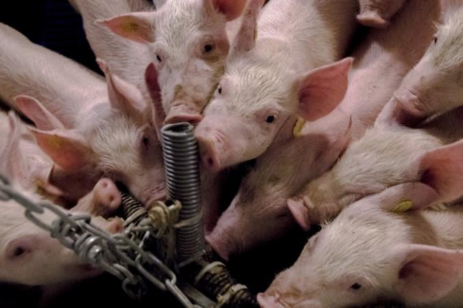 'Knelgevallen' onder varkensboeren kunnen bezoekje provincie verwachten