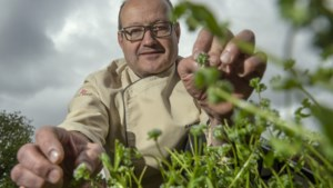 'Voor een Limburgse kok is er zo veel moois in eigen provincie te halen'