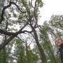 Zorgen Limburgs Landschap om bomensterfte in bossen