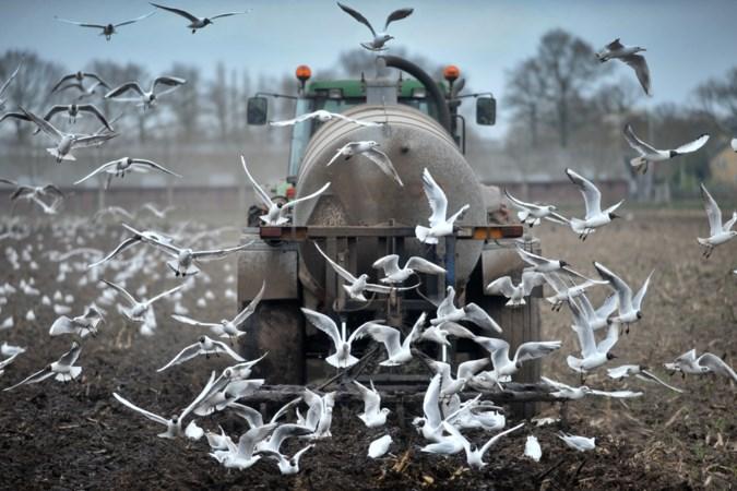 Miljoenenfraude in mestsector al jaren bekend