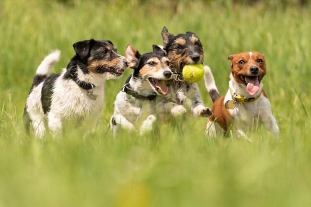 Dag van de Hond bij KC Venray