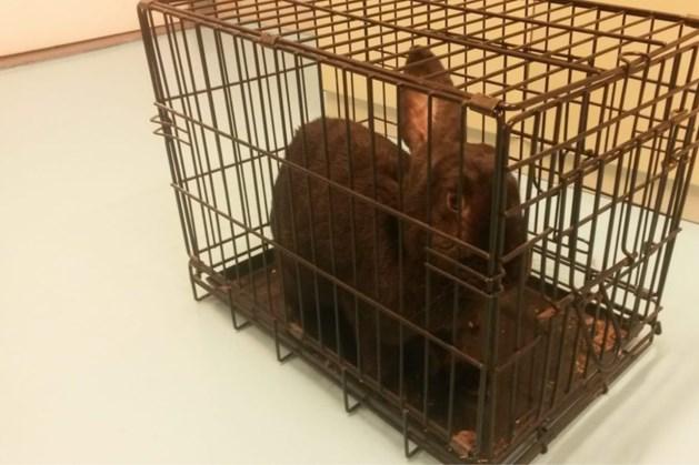 Gewonde konijnen gedumpt in bossen Eygelshoven