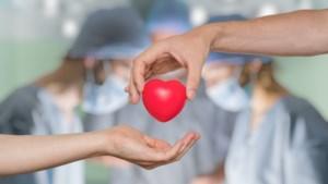 Waar in Limburg zitten de meeste orgaandonoren?