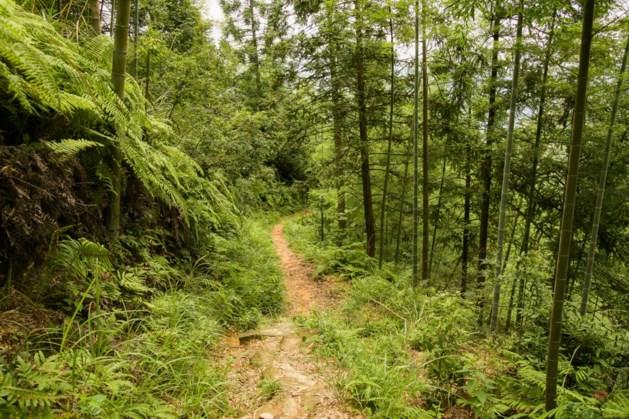 Roermond en Weert geselecteerd voor 'tiny forest'