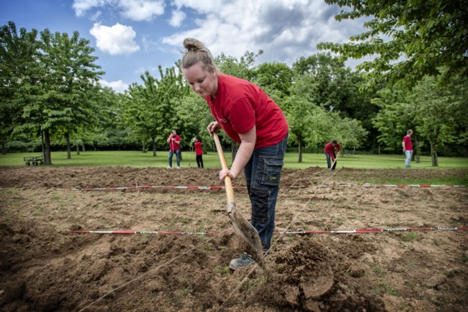 De moestuin duikt als sociaal project in Schinnen, Geleen en Munstergeleen