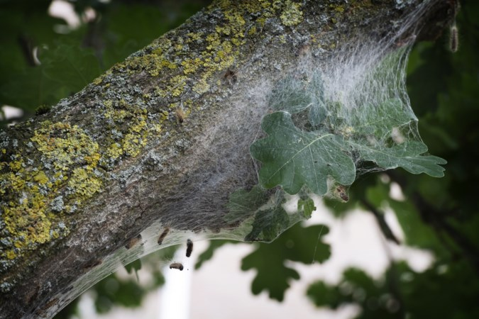 Gulpen-Wittem onderzoekt gebruik gif in bossen na vogelsterfte