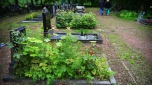 Monumentale begraafplaats in Sittard oogt 'beschamend': 'Het wordt van kwaad tot erger'