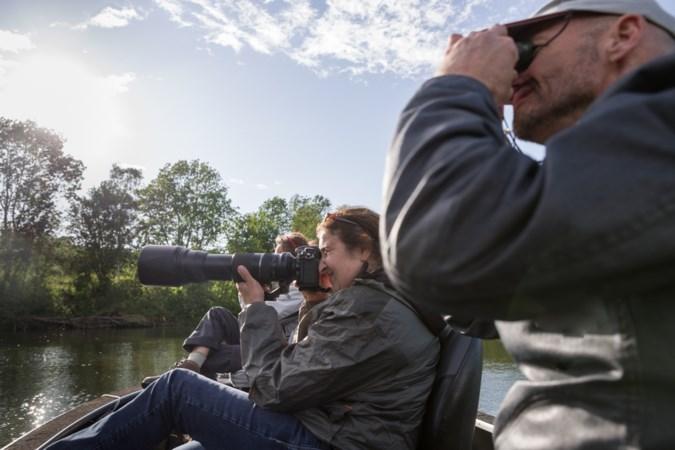Op beversafari langs de oevers van de Maas