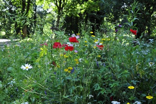 Bloemenwandeling op de Brunssummerheide
