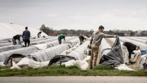 Tekort aan werklui: de Pool verdient een warm bad in Limburg