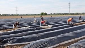 Brabantse aspergeboer buitte arbeidsmigranten uit
