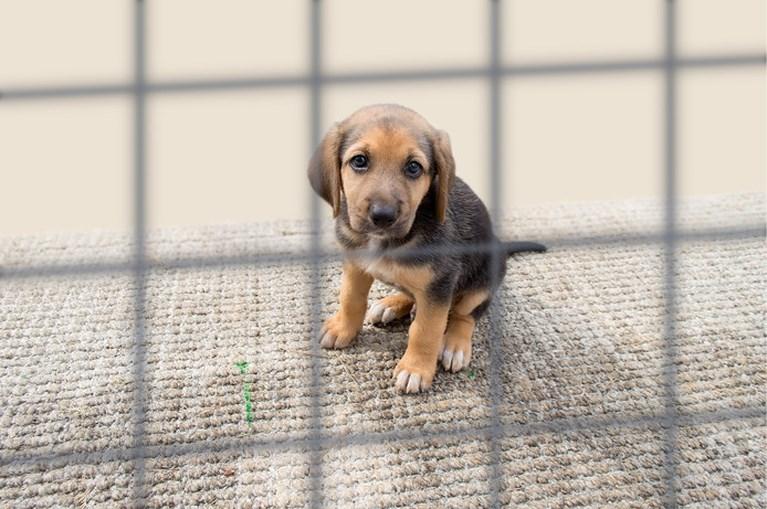 Honden hebben unieke oogspier om zielig te kijken en contact te maken