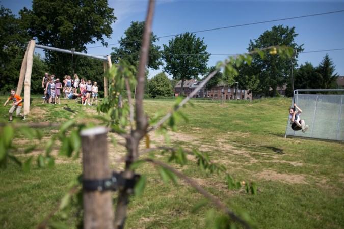 Leerlingen van de Meridiaan in Simpelveld eten straks fruit uit eigen boomgaard