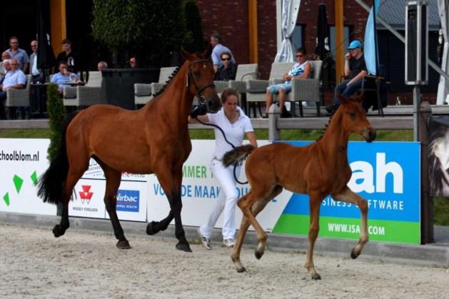 Centrale paardenkeuring terug naar De Vosberg Panningen