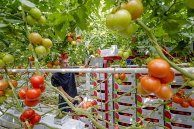 Vakantiewerk in Limburg levert meer op deze zomer