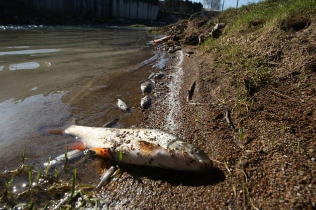 Waterschap laat water in beken om vissterfte tegen te gaan