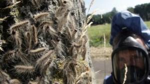 Jeukgolf teistert Nederland: recordaantal klachten bij huisartsen
