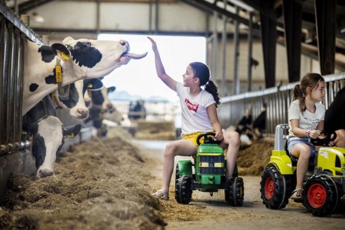 Limburgse ijsboerderijen: zo van de koe in het hoorntje