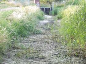 Droogte zorgt voor vissterfte in Middelsgraaf bij Echt