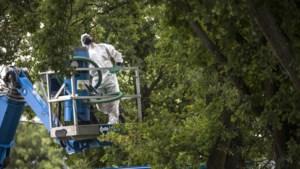 Eikenprocessierups: 'Kap eiken op boomfeestdag'