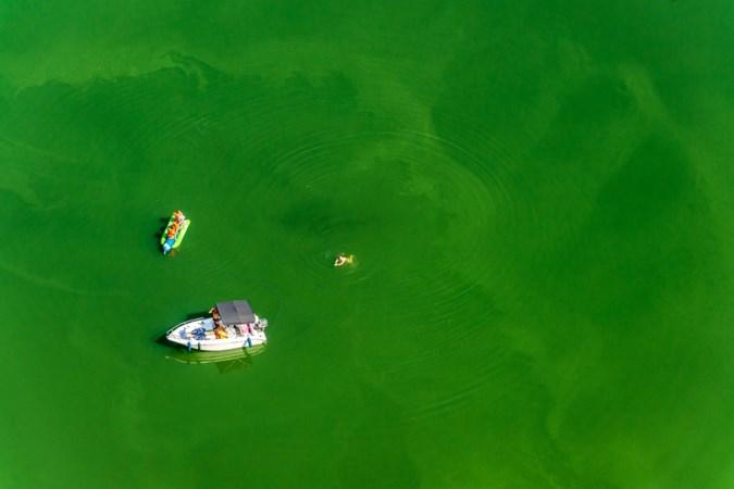 Groene soep: helikopter onderzoekt blauwalg in de Maas