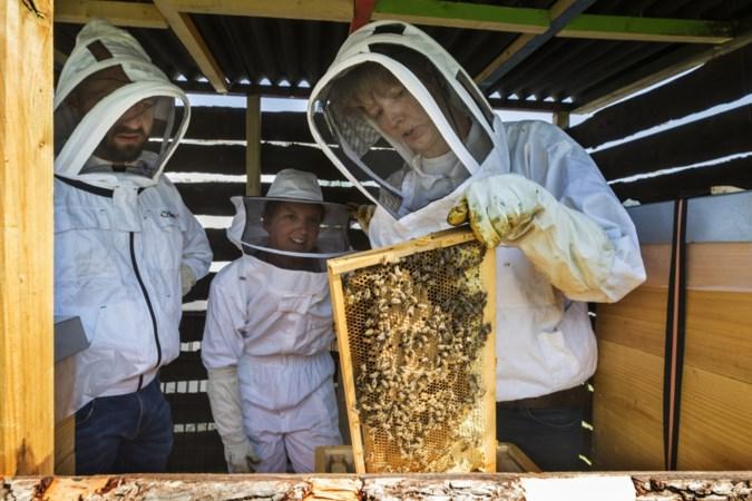 'Byeboere' wil inwoners Maastricht via bijen met elkaar in contact brengen