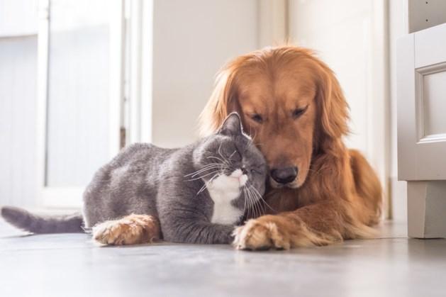 Max Verstappen inspireert hondenbezitters opnieuw