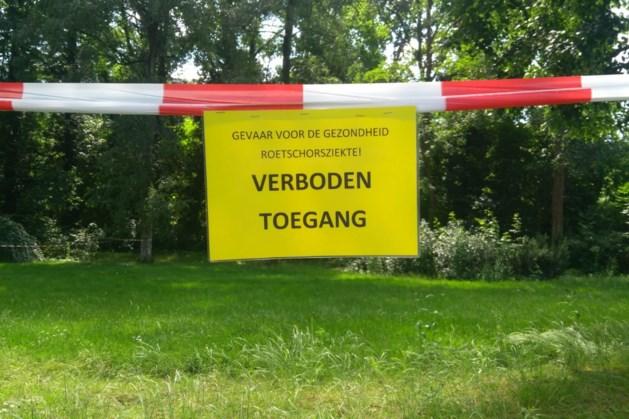 Geen roetschorsziekte bij bomen Aambos en Huize de Berg Heerlen