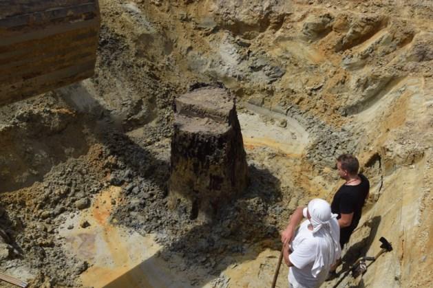 Grote hoeve uit middeleeuwen opgegraven in Weert