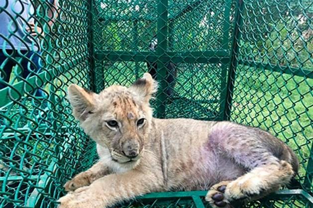 Bijna 600 verdachten opgepakt bij wereldwijde actie tegen dierensmokkel