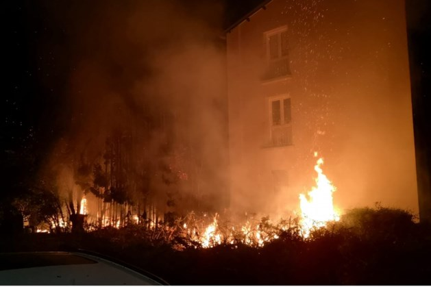 Nachtelijke brand legt coniferen in de as