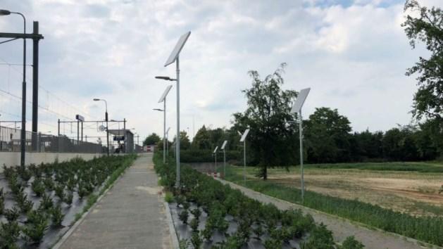 Station Blerick eerste met lichtmasten op zonne-energie