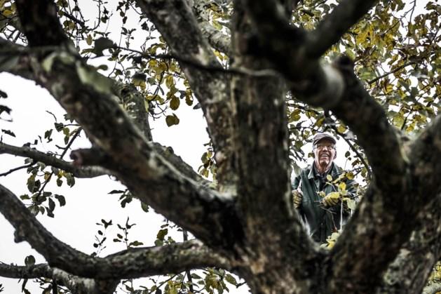 IVN afdelingen Westelijke Mijnstreek verzorgen 'bomenwandelingen'